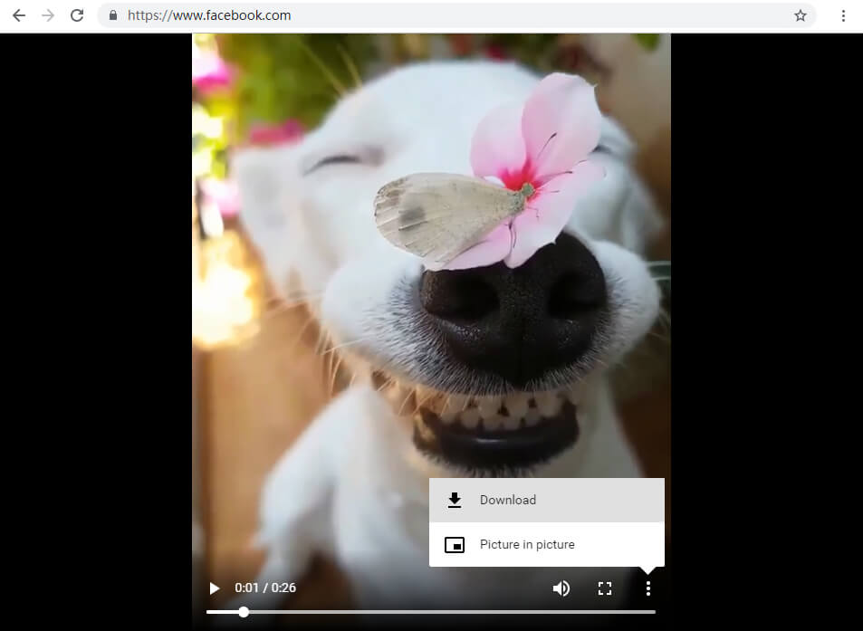 save Facebook video with Amoyshare Facebook video downloader