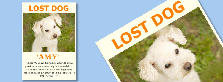 Lost Dog Photo Collage  Lost Pet Flyer Maker